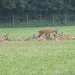 Duitsland - Bad Munstereifel - 11-09-2014 t.e.m. 14-09-2014 - 030